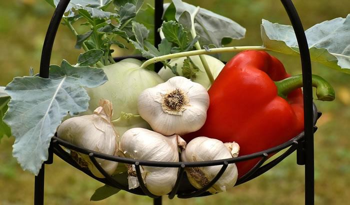 How to Grow Garlic On Your Homestead Garden